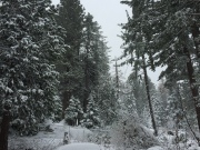 Sunday Snow Day
