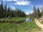 Meadows and streams